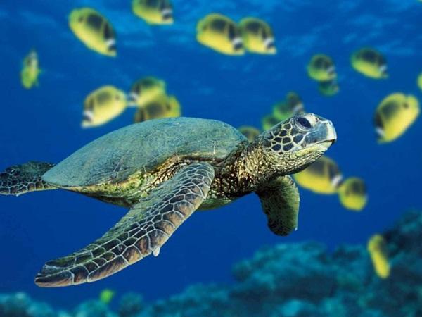 Nằm mơ thấy rùa mang đến cho bạn những điềm báo gì?