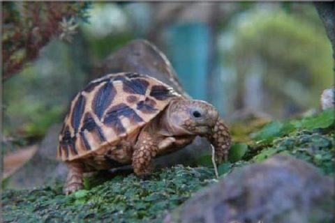 Tại sao lại mơ thấy rùa?