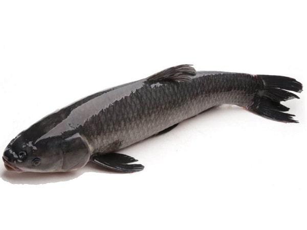 Mơ thấy cá trắm là điềm báo gì, mang đến ý nghĩa gì may mắn