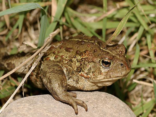 Tại sao lại mơ thấy con ếch