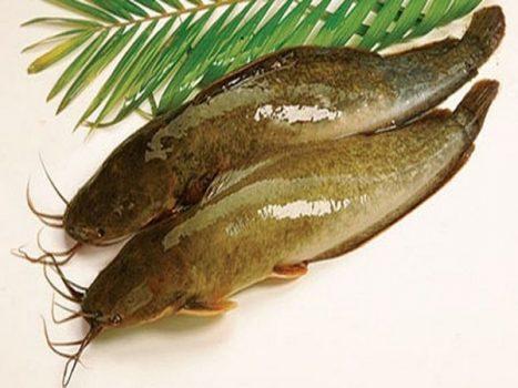 Lý giải điềm báo mơ thấy cá trê đem đến những ý nghĩa gì?