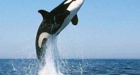 Mơ thấy cá voi – Giải mã điềm báo của giấc mơ thấy cá voi