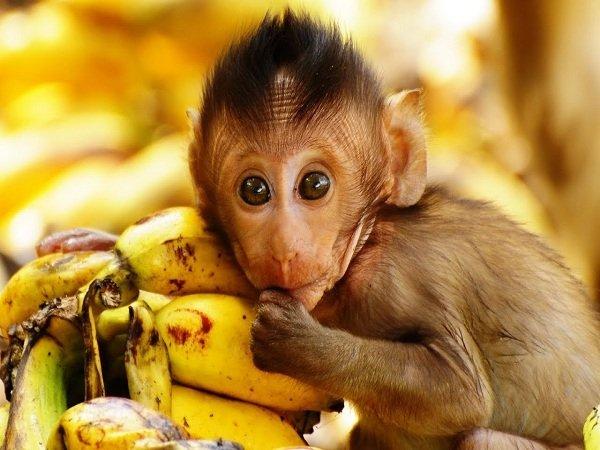 Ngủ mơ thấy con khỉ là điềm gì? đánh đề con gì ?