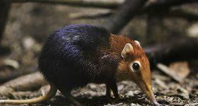 Nằm mơ thấy chuột chù nên đánh con gì chắc ăn nhất