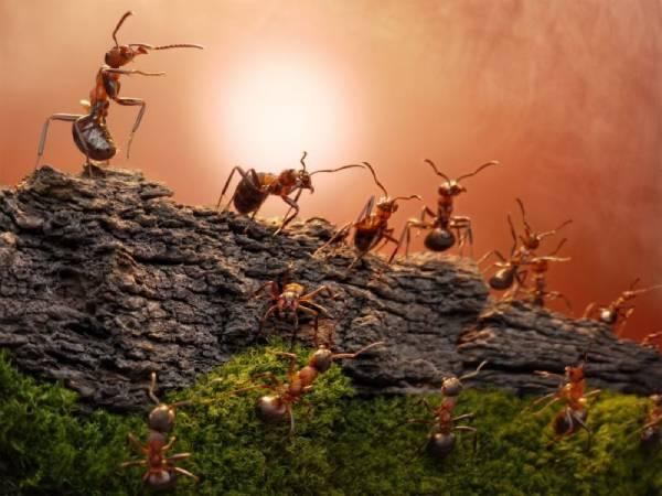 Chiêm bao mơ thấy con kiến là điềm tốt hay xấu ? Đánh con gì ?