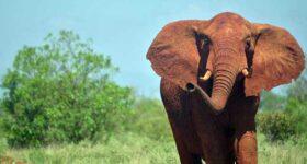 Mơ thấy voi – Ý nghĩa của giấc mơ thấy voi là gì