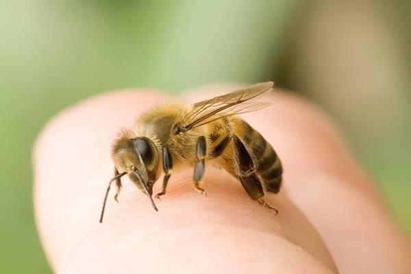 Nằm mơ bị ong đốt đánh con gì đánh số mấy