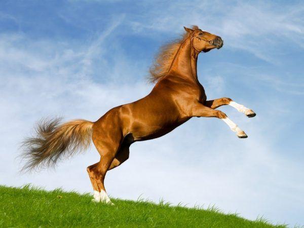 Giải mã giấc mơ thấy ngựa điềm báo lành hay dữ? Đánh con gì chính xác?