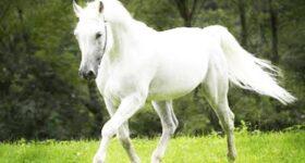 Nằm mơ thấy con ngựa trắng đánh con gì đánh số mấy hôm nay