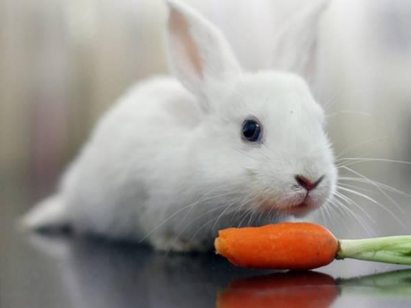 Mơ thấy thỏ là điềm gì? Lựa chọn cặp số thần Tài nào?