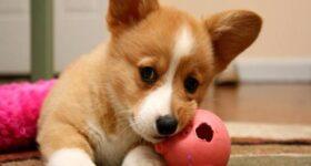 Nằm mơ thấy chó là điềm lành hay dữ ? Đánh lô đề số mấy ?