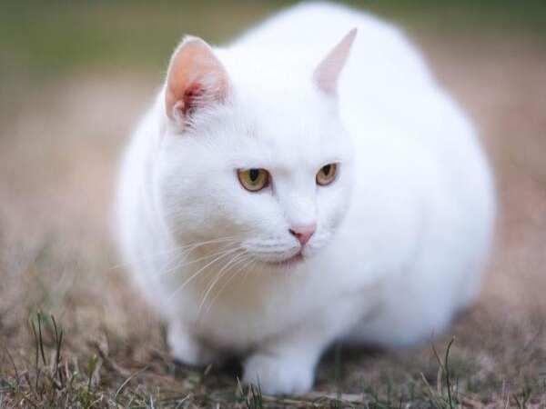 Luận giải ý nghĩa giấc mơ thấy mèo trắng ? Đánh lô số mấy ?