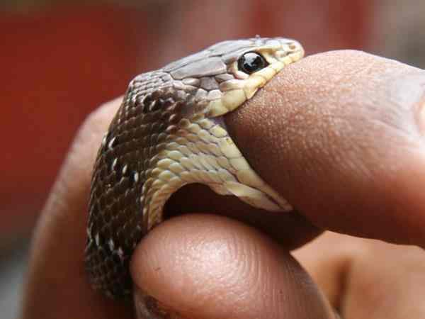 Mơ thấy rắn cắn – Là điềm báo gì ? Đánh lô số mấy ?